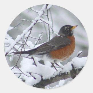 Pegatinas americanos del pájaro del petirrojo pegatina redonda