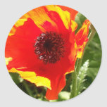 Pegatinas anaranjados de la amapola etiquetas redondas
