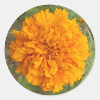 Pegatinas anaranjados del clavel pegatina redonda