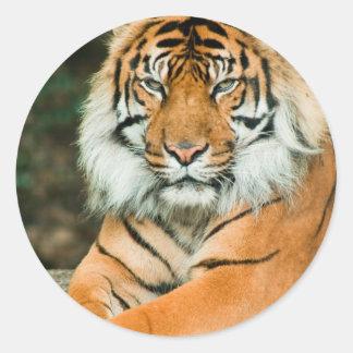 Pegatinas anaranjados del tigre pegatina redonda