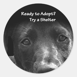 Pegatinas animales de la adopción pegatina redonda