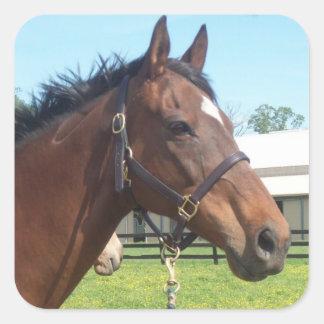 Pegatinas árabes alertas del caballo calcomanía cuadrada personalizada