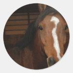 Pegatinas árabes de los caballos pegatina redonda