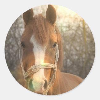 Pegatinas árabes del caballo de la castaña etiqueta redonda