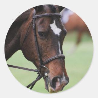 Pegatinas árabes lindos del caballo etiquetas redondas
