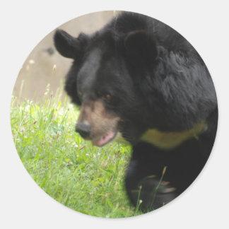 Pegatinas asiáticos del oso negro pegatina redonda