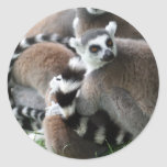 Pegatinas atados anillo de los Lemurs Pegatina Redonda