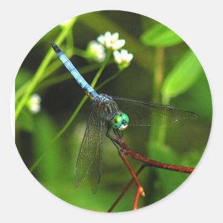 Pegatinas azules de la libélula de Dasher Pegatina Redonda