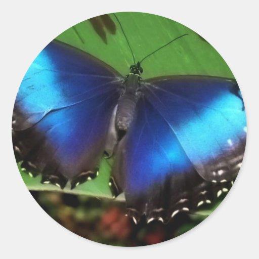 Pegatinas azules de la mariposa del ala etiqueta redonda