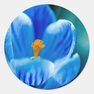 Pegatinas azules del azafrán pegatinas redondas