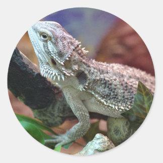 Pegatinas barbudos del dragón pegatina redonda