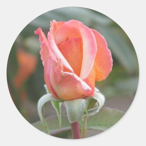 Pegatinas color de rosa anaranjados de la puesta pegatina redonda