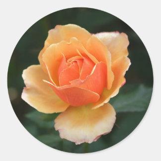 Pegatinas color de rosa anaranjados del sobre pegatina redonda
