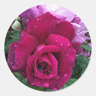 Pegatinas color de rosa púrpuras pegatina redonda