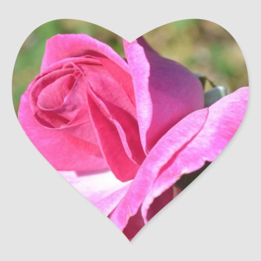 Pegatinas color de rosa rosados del corazón de pegatina de corazon personalizadas
