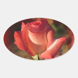 Pegatinas color de rosa rosados pegatina ovalada