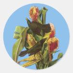 Pegatinas comunes del arte del pájaro de Audubon Pegatinas Redondas