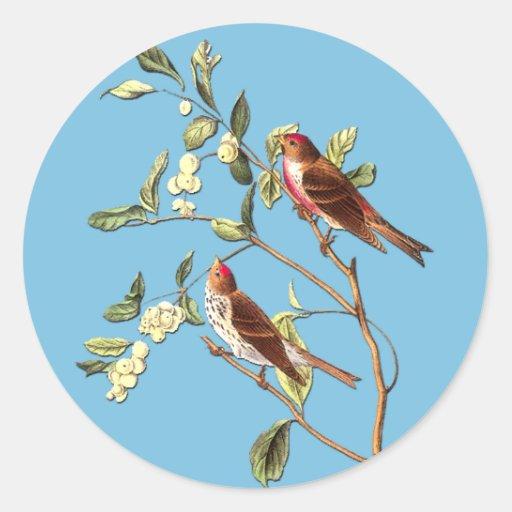 Pegatinas comunes del arte del pájaro del Redpoll Etiqueta Redonda