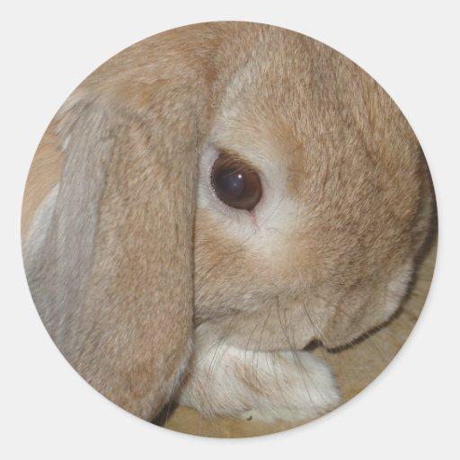 Pegatinas - conejo enano espigado del Lop Pegatina Redonda