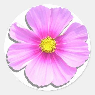 Pegatinas - cosmos bicolor etiqueta redonda
