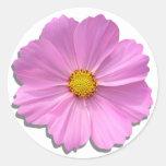Pegatinas - cosmos rosado medio etiquetas redondas