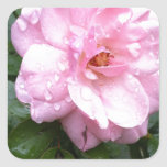 Pegatinas cuadrados - color de rosa rosado suave pegatina cuadradas personalizada