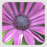 Pegatinas cuadrados - flor púrpura calcomanía cuadrada personalizada