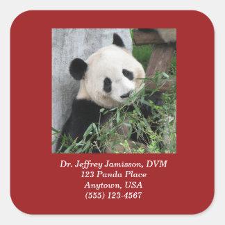 Pegatinas cuadrados, pandas gigantes, veterinario calcomanía cuadrada