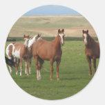Pegatinas cuartos de la manada del caballo pegatinas redondas