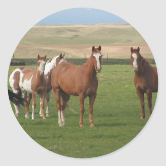 Pegatinas cuartos de la manada del caballo pegatina redonda