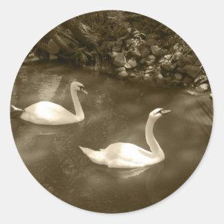 Pegatinas curiosos de los cisnes pegatina redonda