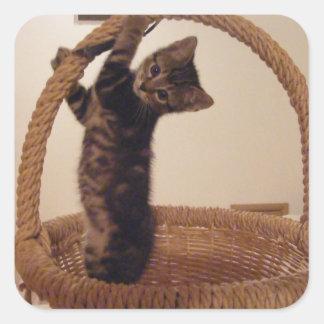 Pegatinas curiosos del gatito del Basketeer Pegatina Cuadrada