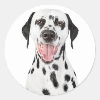 Pegatinas dálmatas felices del saludo del perro de pegatina redonda