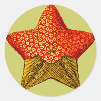 Pegatinas de Asteridia estrella de mar