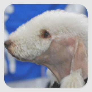 Pegatinas de Bedlington Terrier Colcomanias Cuadradass
