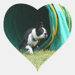 Pegatinas de Boston Terrier de la agilidad Calcomanías Corazones