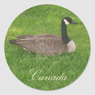 Pegatinas de Canadá del ganso de Canadá Pegatina Redonda