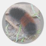 Pegatinas de Caterpillar de oso lanoso Pegatina Redonda
