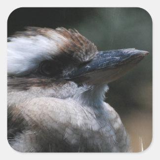 Pegatinas de Kookaburra Calcomanías Cuadradass Personalizadas