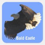 Pegatinas de la colección II del vuelo de Eagle Pegatinas Cuadradases Personalizadas