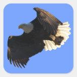 Pegatinas de la colección II del vuelo de Eagle Calcomanía Cuadradase