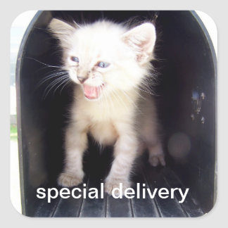 pegatinas de la entrega especial pegatina cuadrada
