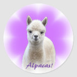 Pegatinas de la esperanza de la alpaca pegatinas redondas