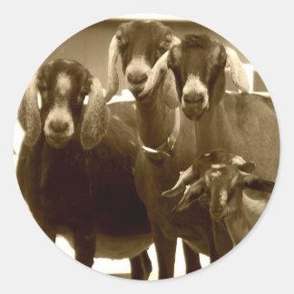 Pegatinas de la familia de la cabra pegatina redonda