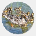 Pegatinas de la familia del pato pegatinas redondas