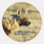 Pegatinas de la fauna del hyena de Brown Pegatinas Redondas
