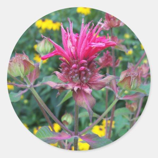Pegatinas de la flor de Beebalm Etiqueta Redonda