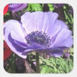 Pegatinas de la flor de la amapola azul pegatina cuadrada