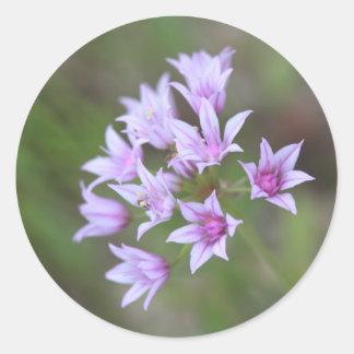 Pegatinas de la flor de la lavanda pegatina redonda