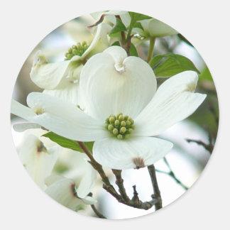 Pegatinas de la flor del árbol de Dogwood Pegatinas Redondas